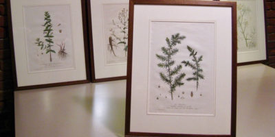 Ferns, antique print collection